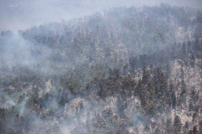 Το καμένο δάσος στην Εύβοια