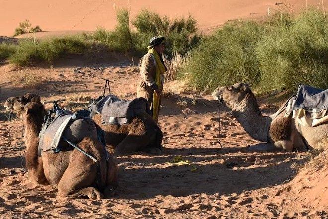 Στεγνοί από αλκοόλ, αλλά συγκρατημένα προοδευτικοί: Οι άντρες Μουσουλμάνοι στο Μαρόκο πιάνονται χέρι χέρι στο δρόμο