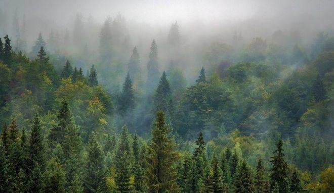 Πετρελαϊκή εταιρεία θα φυτέψει δάσος έκτασης ίσης με το 25% της Ιταλίας