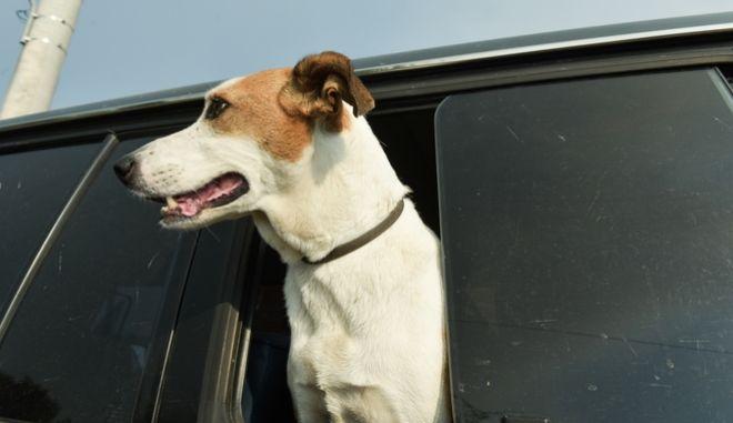 Σκύλος στο αυτοκίνητο (φωτό αρχείου)