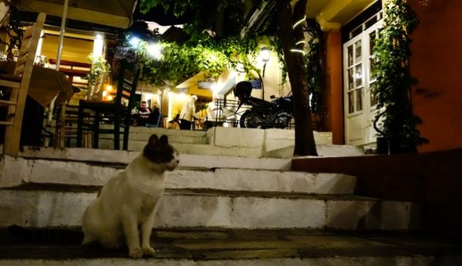 """Έρευνα για κορονοϊό: """"Οι γάτες κολλάνε, τα σκυλιά όχι"""""""