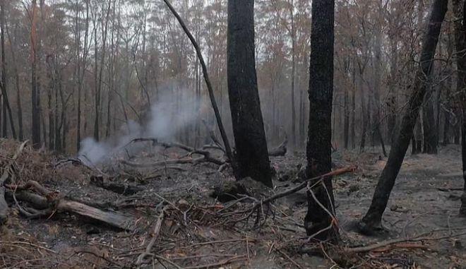 Αυστραλία: Οι βροχοπτώσεις διαλύουν το τοξικό νέφος