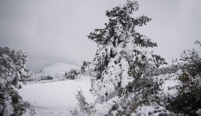 ΧιόνιαΦωτογραφία αρχείου