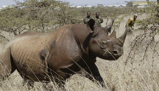 Επτά μαύροι ρινόκεροι, είδος που κινδυνεύει να εξαφανιστεί, πέθαναν κατά τη μεταφορά τους σε πάρκο άγριας φύσης στην Κένυα, σύμφωνα με τις τοπικές αρχές.