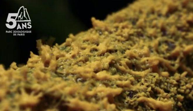 Blob: Το κιτρινωπό ον που μοιάζει με μύκητα, αλλά συμπεριφέρεται σαν ζώο