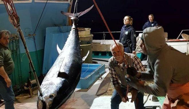 Ψάρεψαν τόνο 288 κιλών