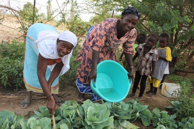 Από τα χημικά, στη βιολογική γεωργία: Η περίπτωση της Σενεγάλης