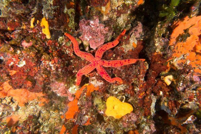 Ο μαγευτικός βυθός του θαλάσσιου πάρκου γύρω από την Αλόννησο