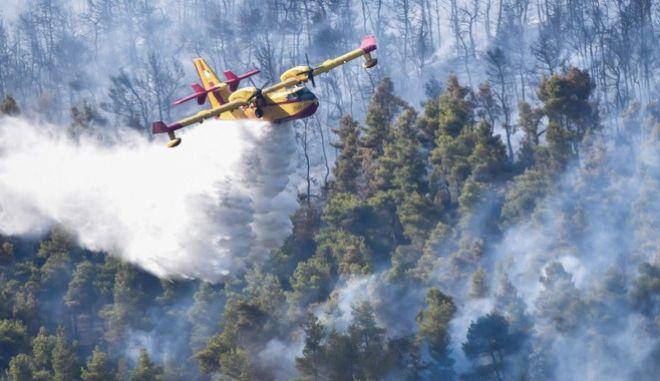 Μάχη για να περιορίσουν τη φωτιά στα Βίλια δίνουν τα εναέρια μέσα