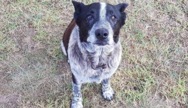 Ηλικιωμένος σκύλος έμεινε 15 ώρες στο πλάι 3χρονης που χάθηκε στο βουνό