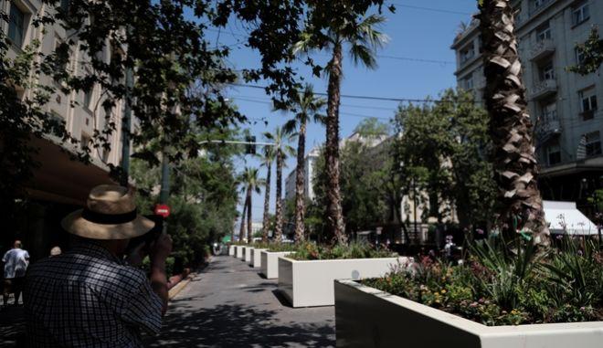Φοίνικες στην Οδό Πανεπιστημίου την Παρασκευή 3 Ιουλίου 2020. (EUROKINISSI / ΒΑΣΙΛΗΣ ΡΕΜΠΑΠΗΣ)