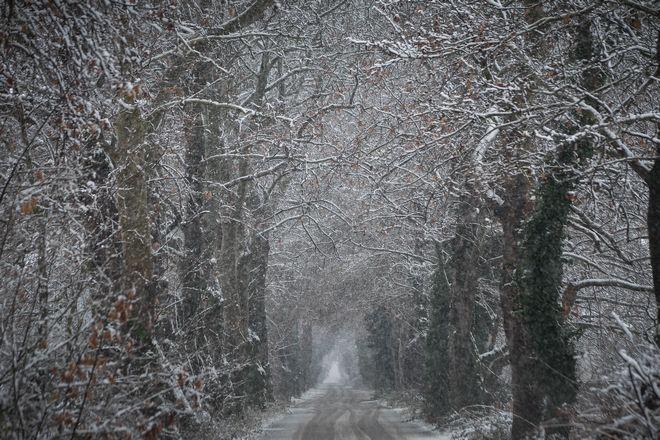 Δρόμος μέσα από χιονισμένα πλατάνια στα Τρίκαλα