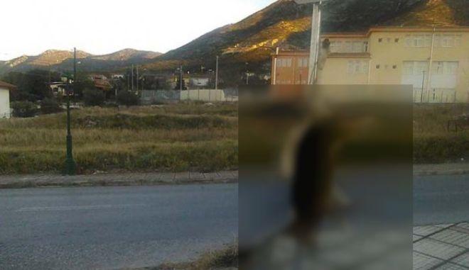 Χαλκιδική: Κτηνωδία. Άγνωστος σκότωσε και κρέμασε σκύλο σε πινακίδα σήμανσης έξω από σχολείο