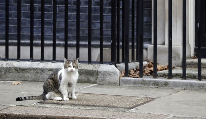 Γάτα (ΦΩΤΟ Αρχείου)