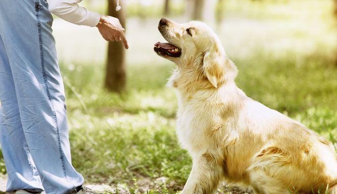 Σκύλος (φωτογραφία αρχείου)