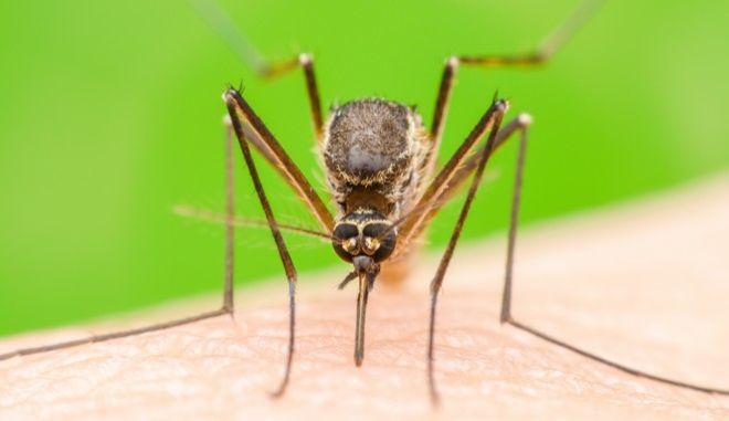 Υπάρχουν λόγοι που κάνουν κάποιους πιο 'νόστιμα' γεύματα για τα κουνούπια, από ό,τι άλλους. Όπως και γιατί μας πίνουν το αίμα.