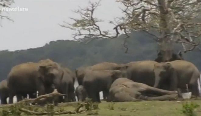 Συγκινητικό βίντεο: 300 ελέφαντες θρηνούν τον θάνατο του αρχηγού τους