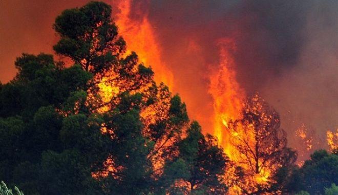Συναγερμός στην Σκόπελο. Πυρκαγιά κατακαίει πευκόφυτη περιοχή