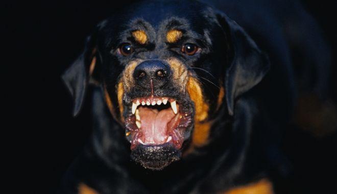 Ίλιον: Σκύλος δάγκωσε αστυνομικούς κατά τη διάρκεια καταδίωξης