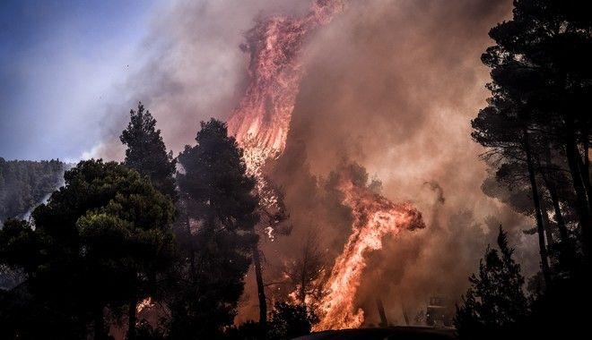 Πυρκαγιά σε δασική έκταση στην περιοχή Αγριλίτσα του δήμου Διρφύων-Μεσσαπίων, στην Εύβοια.