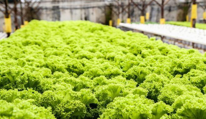 Το πρώτο αγρόκτημα που λειτουργεί αποκλειστικά με ρομπότ