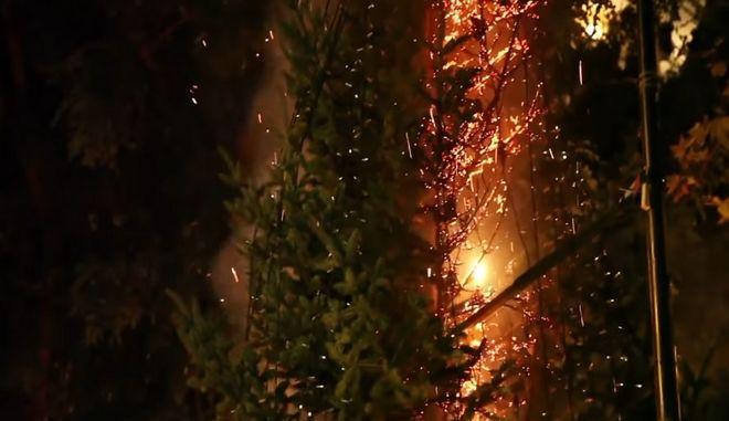 Καρέ-καρέ: Έκαψαν το δέντρο στα Εξάρχεια