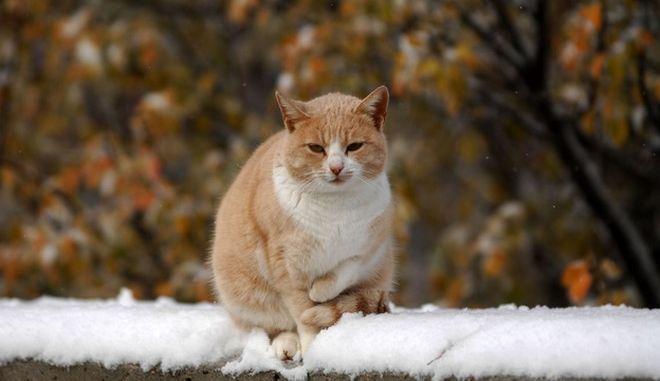 Χιονόπτωση στα Μετέωρα, την Τετάρτη 30 Νοεμβρίου 2016. (EUROKINISSI/ΘΑΝΑΣΗΣ ΚΑΛΛΙΑΡΑΣ)