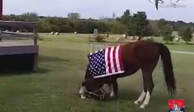 Άλογο υποκλίνεται μπροστά σε βετεράνους πολέμου