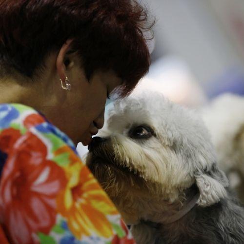 """Ο καρδιακός ρυθμός ενός σκύλου αυξάνεται όταν ο ιδιοκτήτης λέει """"Σ' αγαπώ"""" σύμφωνα με έρευνα"""