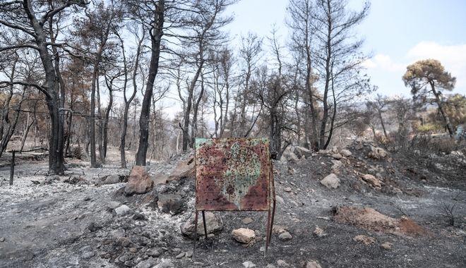 Καμμένες εκτάσεις γης από την καταστροφική πυρκαγιά στην Εύβοια