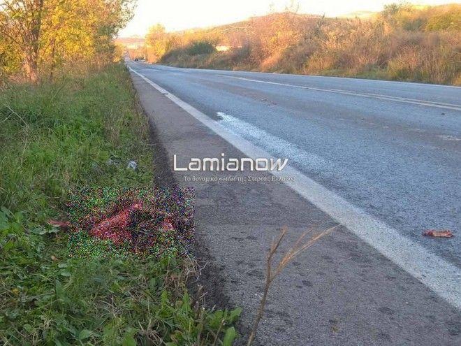 Στυλίδα: Οδηγός συγκρούστηκε με αγριογούρουνα - Εφτά νεκρά