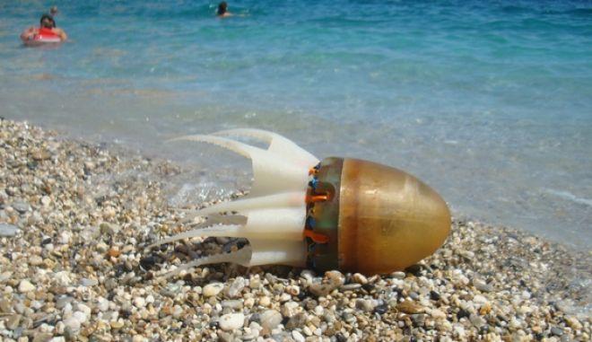 Octobot: Το ρομποτικό χταπόδι που διασχίζει τα νερά της Μεσογείου είναι ελληνικό