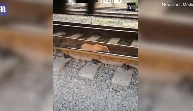 Κουτάβι ξεγέλασε το θάνατο: Περπατούσε στις ράγες ενώ τρένο περνούσε από πάνω του