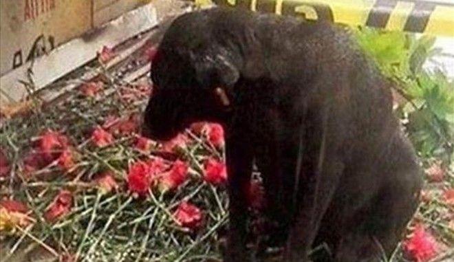 Ο Χάτσικο της Σμύρνης περιμένει την επιστροφή του αστυνομικού που σκοτώθηκε