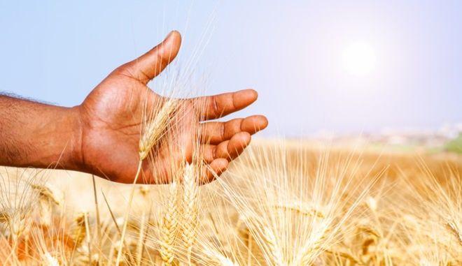Παγκόσμια Ημέρα Διατροφής: Πρόσβαση σε ποιοτικά τρόφιμα για όλους