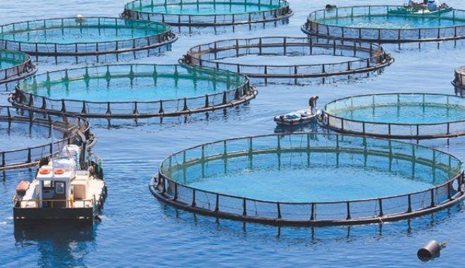 Οι ελληνικές ιχθυοκαλλιέργειες κατέχουν το 37% της πορτογαλικής αγοράς σε τσιπούρα και λαβράκι