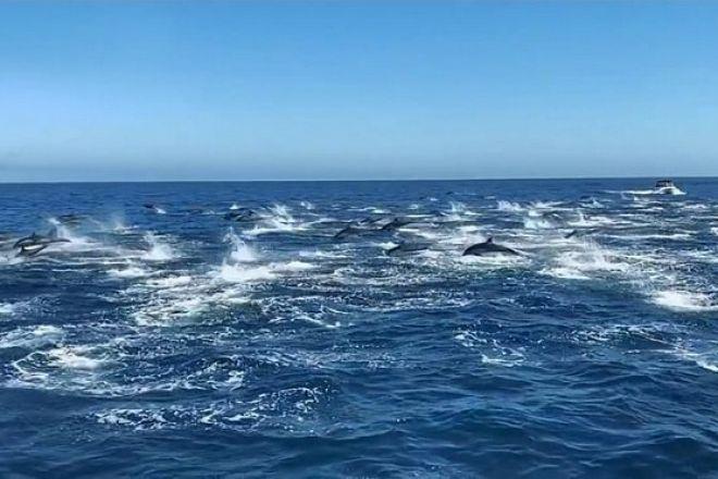 Μαγευτικό θέαμα από κοπάδι εκατοντάδων δελφινιών