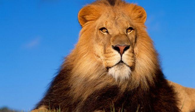 λίστα θανατηφόρα ζώα top 10