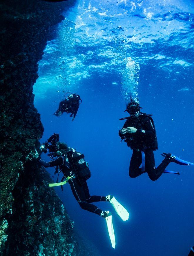 Ο βυθός της Αλοννήσου είναι από τους πιο παρθένους και πλούσιους της Μεσογείου. Άνθρωποι από όλο τον κόσμο έρχονται εδώ για καταδύσεις