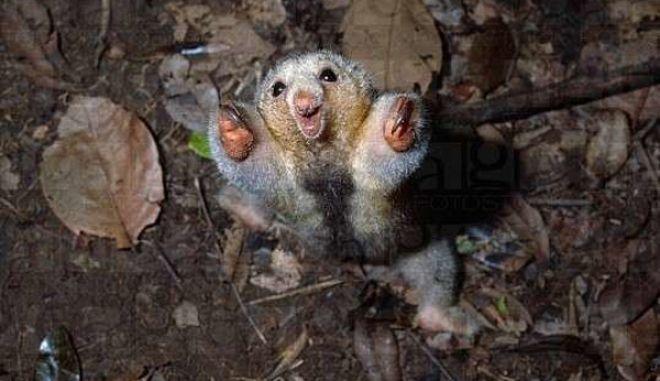 diaforetiko.gr : smallest animals21 Εκπληκτικές Φωτογραφίες: Ζώα μινιατούρες. Και όμως υπάρχουν!