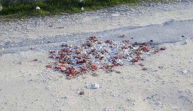 Απίστευτο: 'Μπάλωσαν' λακκούβες με σπασμένα πιάτα και γαρύφαλλα από μπουζουξίδικο στη Λάρισα
