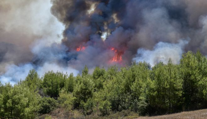 Ηλεία: Καίγεται αναγεννημένο δάσος από τις μεγάλες φωτιές του 2007