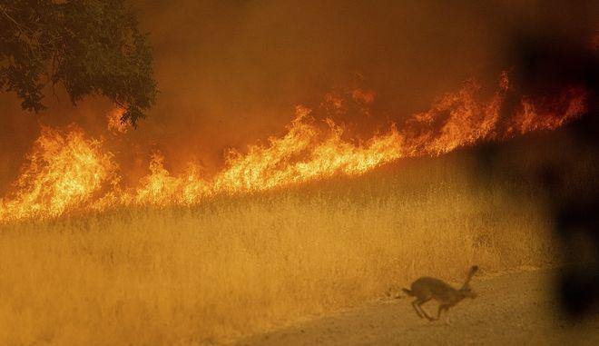 Ένας νεκρός, μεγάλες καταστροφές από φωτιά στην Καλιφόρνια