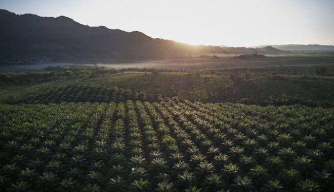 Γουατεμάλα: Τα φοινικόδεντρα σκιάζουν τα ανθρώπινα δικαιώματα