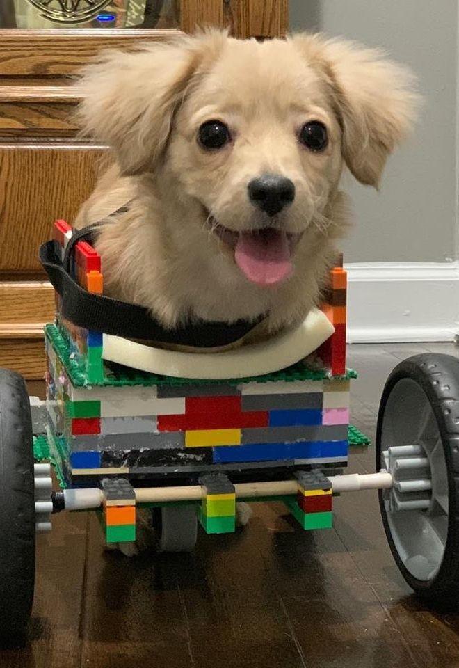 Ο 12χρονος Dylan έφτιαξε αναπηρικό καρότσι από Lego για το κουτάβι του