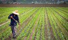 Πρόγραμμα αγροτικής ανάπτυξης της Ελλάδας 2014-2020