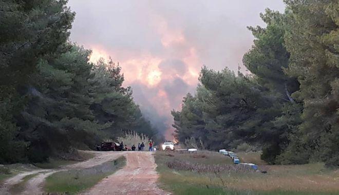 Μεγάλη φωτιά στο δάσος της Στροφυλιάς - Καίγεται σπάνιο οικοσύστημα