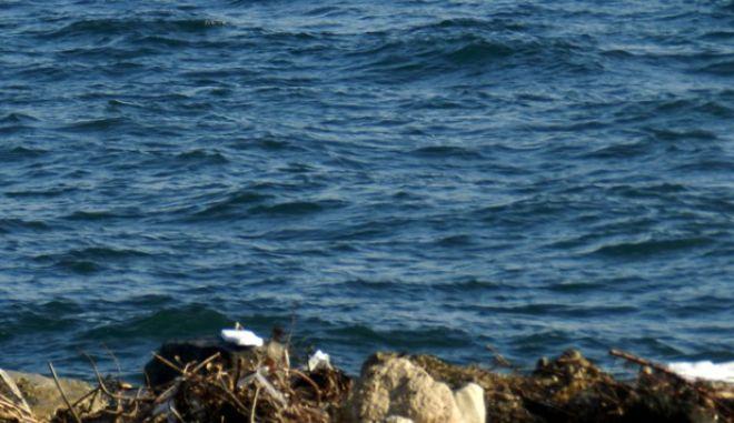 Διάσωση προσφύγων που επέβαιναν σε φουσκωτή βάρκα στον παραλιακό δρόμο του αεροδρομίου στην Λέσβο την στιγμή που περνούσε η αυτοκινητοπομπή που μετέφερε τον πρωθυπουργό Αλέξη Τσίπρα και τον πρόεδρο του Ευρωπαϊκού Κοινοβουλίου Μάρτιν Σούλτς στην Μυτιλήνη την Πέμπτη 4 Νοεμβρίου 2015. (EUROKINISSI)