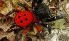 Σπάνια αράχνη εμφανίστηκε στα Τρίκαλα