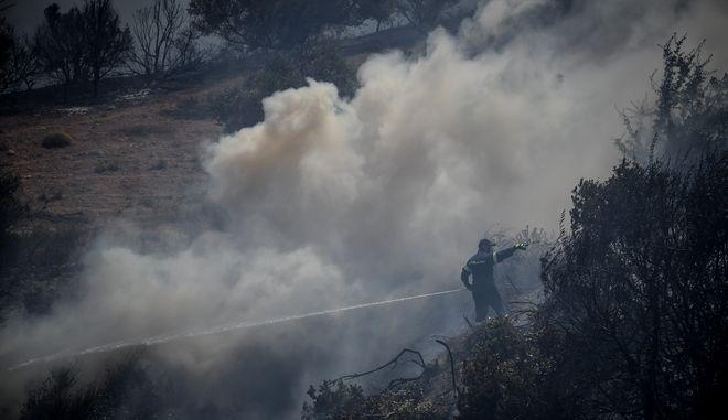 Πυρκαγιά σε δάσος (φωτογραφία αρχείου)